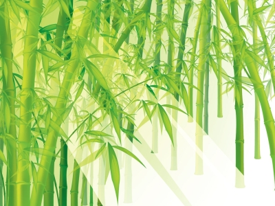 Ppt Bamboo Powerpoint Template Bamboo Powerpoint Template