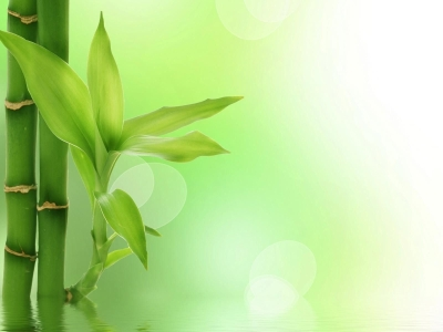Bamboo Background  Powerpoint Background