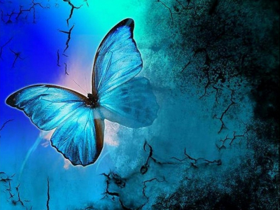 Butterflies Images Shades Of Blue HD Wallpaper And Background Photos