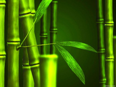 Bamboo Nature Powerpoint Slide Designs