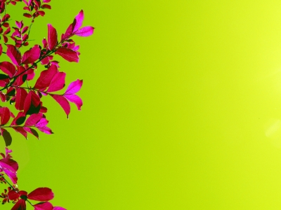 Bright Pink Flowers Green Backgrounds