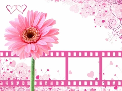 Pretty Pink Flower With Film Clips Background