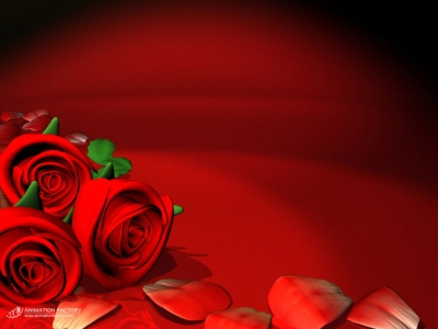 amazing red roses love wallpapers and background #15657