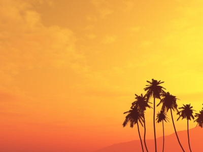Angry Sun Palm Tree Wallpaper