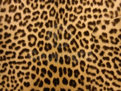 animal print desktop background