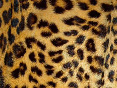 animal spot leopard print background