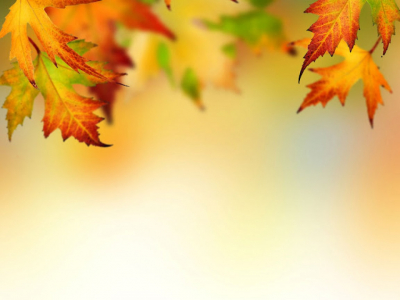 Autumn Leaf Border Background