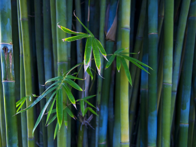 Vintage Background Bamboo