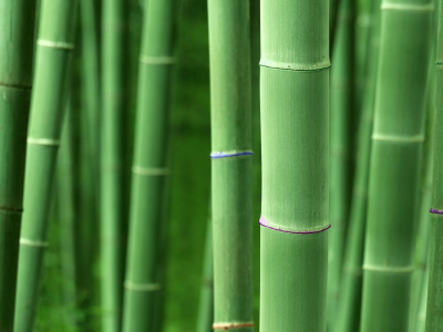 Background Bamboo Cool