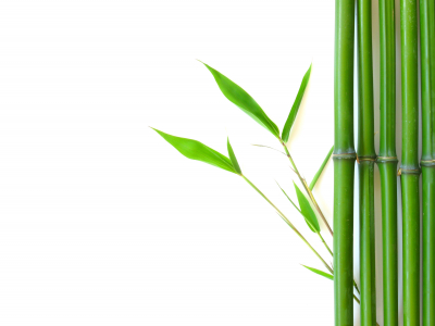 Bamboo Background Graphic