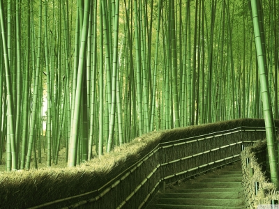Bamboo Background Hd Wallpaper