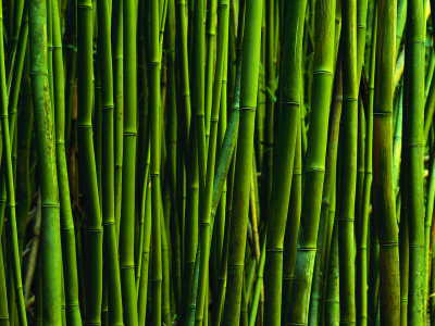 Bamboo Background Wallpaper