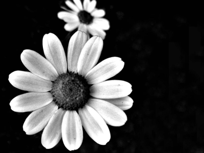 Black And White Flower 6