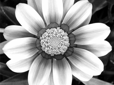 Black And White Flowers Background