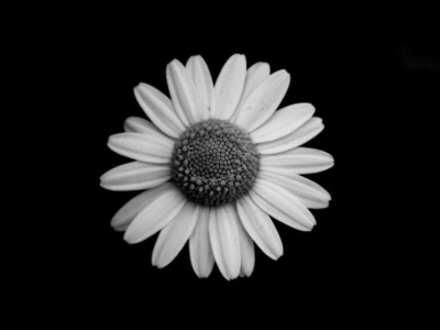 Black And White Flowers Photos