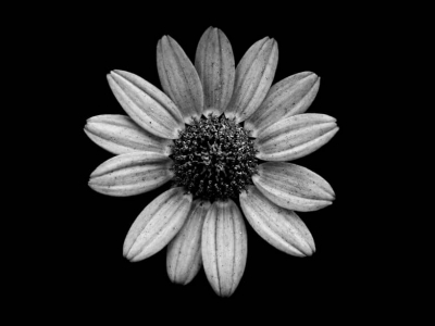 Black And White Flowers Photos Background