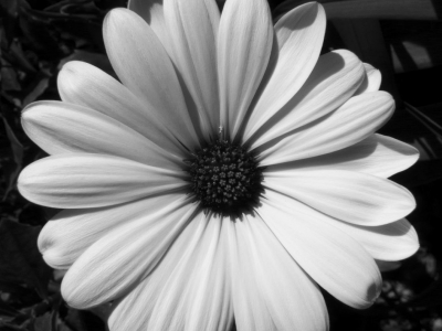 Black And White Photography Flowers Image