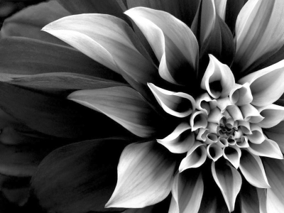 Black And White Real Flowers Many Flowers