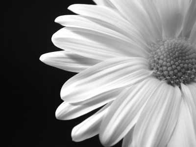Black N White Flower Wallpaper