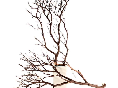Branches Background High-quality