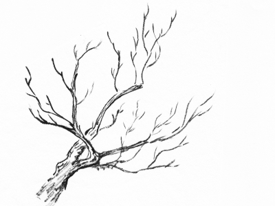 Free Branches Background