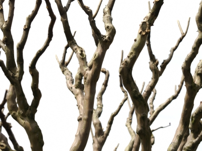 Image Branches Stock
