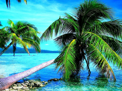 Breath Taking Nature Palm Tree Wallpaper