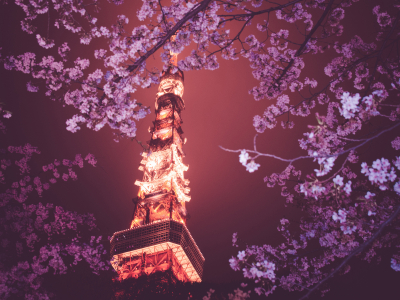 Download Photo Cherry Blossom HD