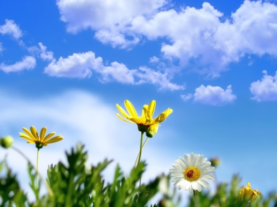 clouds, sky, flowers, spring background #1756