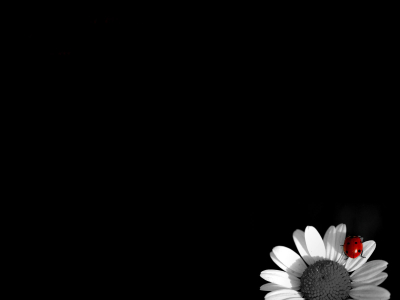 Daisy Black And White Background
