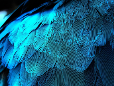 electric blue feathers desktop feather background #15622