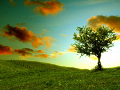 Fantastic Lonely Tree Photography Wallpaper
