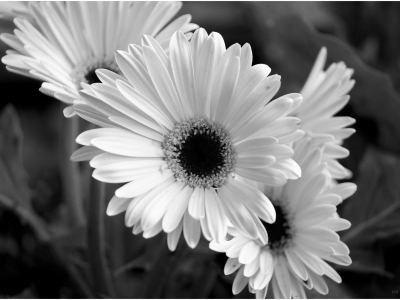 Flower Black And White  New Calendar Template