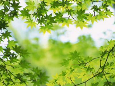 Green Images Green Leaves Hd Wallpaper