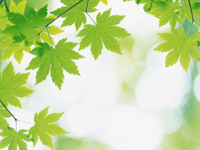 Green Leaves And Green Leaf Background