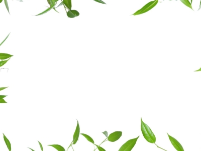 Green Leaves Border Background