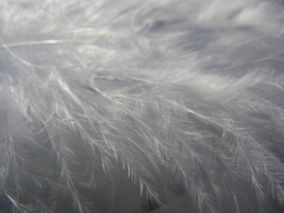 grey texture feather background #15630