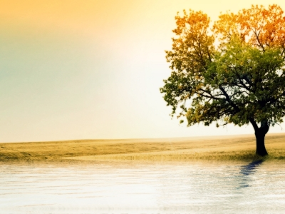 Hd Tree And Sea Wallpaper
