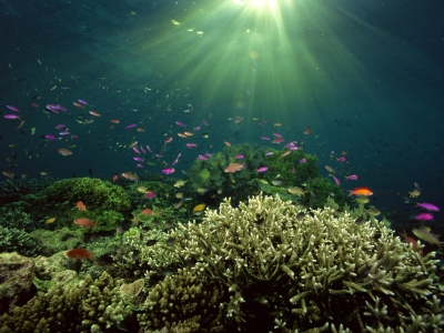 hd underwater green life wallpaper #12368