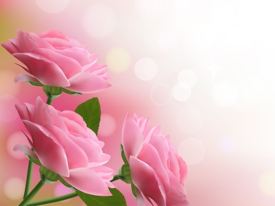 Holiday Background With Pink Beautiful Flowers