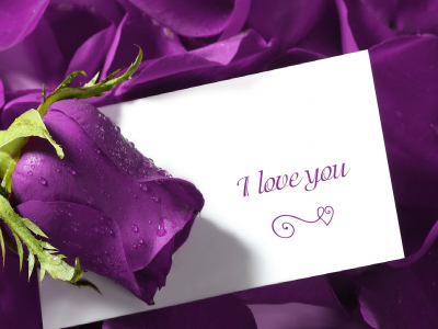 I Love You Purple Rose Wallpaper Hd