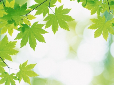 Leaves Background Hd Image