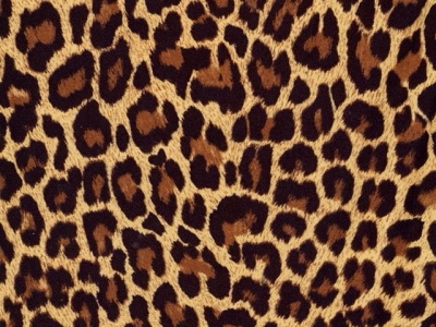 leopard print background images #15955