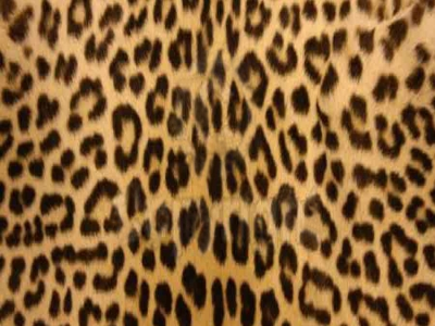 leopard print transparent background