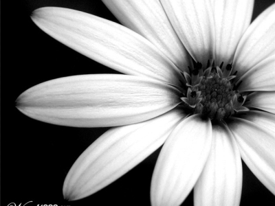 Lonely Flower Black And White