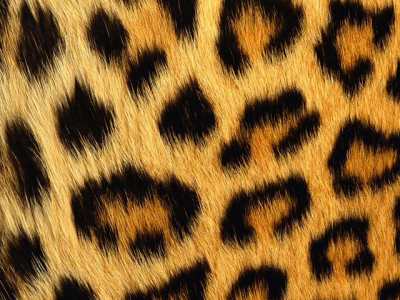 natural animal print ️background