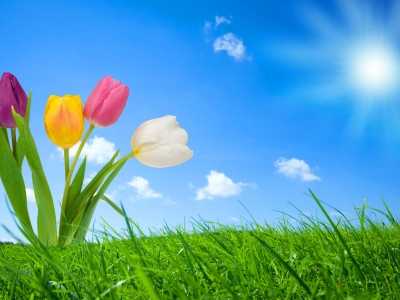 Nature Flowers Spring HD Background Image #1759