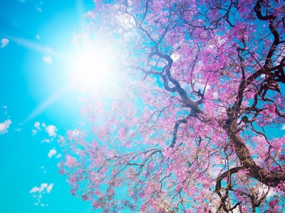 Nature Spring HD Background