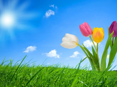 Nice Spring Background Hd