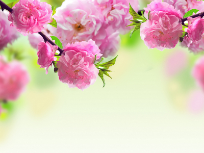 Pink Flowers Mother Day Walpaper
